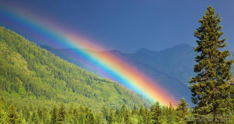 rainbow-over-trees